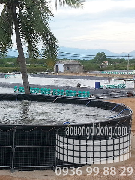 MULTI-PATTERNS - shrimp farming solution 2 phases